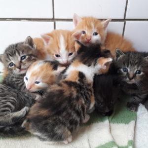 een-bult-met-kittens