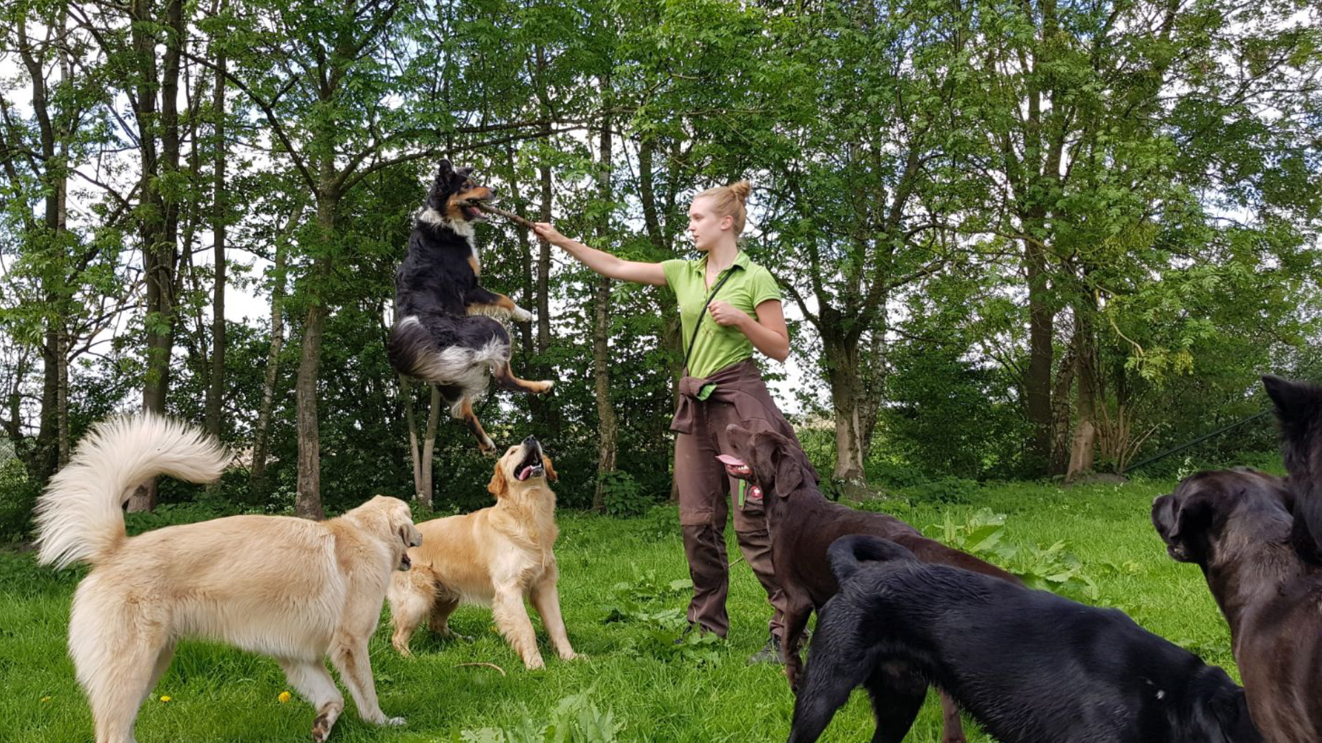 Dagopvang voor uw hond!