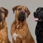 Dierenpension Honden & Katten