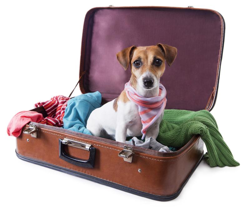 Gezocht: Hondenvakantie